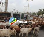 magal2014-cheikh-bethio-9
