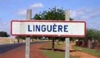 linguere